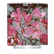 Spring Dogwood Tree Flowers Art Prints Pink Flowering Tree Shower Curtain by Baslee Troutman