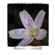 Star Of Bethlehem Shower Curtain by Paul Ward