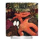 Starfish Medley Shower Curtain by Methune Hively