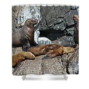 Steller Shower Curtain by Rick  Monyahan