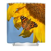 Summer Time Shower Curtain by Mircea Costina Photography