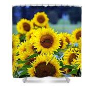 Sunflowers Shower Curtain by Paul Ward