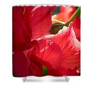 Sunlight on Red Hibiscus Shower Curtain by Carol Groenen
