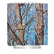 Sunning In The Tree Shower Curtain by Aimee L Maher Photography and Art Visit ALMGallerydotcom