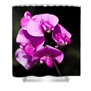 Sweat Pea Shower Curtain by Dawn OConnor