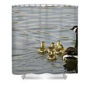 Swimming Lessons Shower Curtain by Heather Applegate
