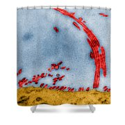 Tem Of Influenza Virus Shower Curtain by Science Source