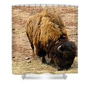 The American Buffalo Shower Curtain by Bill Cannon