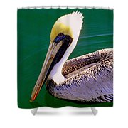 The Happy Pelican Shower Curtain by Karen Wiles