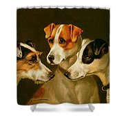The Hounds Shower Curtain by Alfred Wheeler