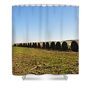 The Line Up Shower Curtain by Bill Cannon