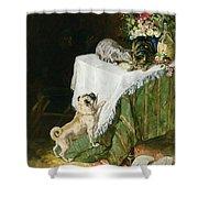The Mischievous Tabbies Shower Curtain by Clemence Nielssen