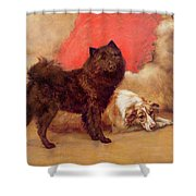 The Red Cushion Shower Curtain by Maud Earl