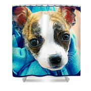 The Three Amigos Teacup Chihuahua Shower Curtain by Peggy  Franz