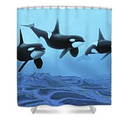Three Male Killer Whales Swim Shower Curtain by Corey Ford