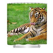Tiger Shower Curtain by Carlos Caetano