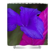 Tillandsia Cyanea Shower Curtain by Heiko Koehrer-Wagner
