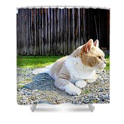 Toby Old Mill Cat Shower Curtain by Sandi OReilly
