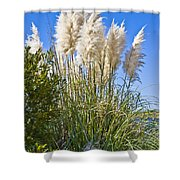 Topsail Grasses Shower Curtain by Betsy C  Knapp