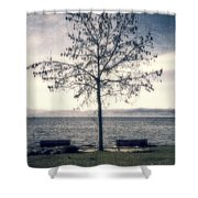 tree at lake Constance Shower Curtain by Joana Kruse