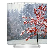 Tree In The Winter Shower Curtain by Natural Selection Craig Tuttle