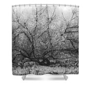 Tree of Enchantment Shower Curtain by Debra and Dave Vanderlaan