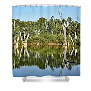 Tree Stumps In The River Shower Curtain by Kaye Menner