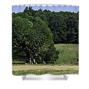 Trumpet Vine And Fence At Appomattox Courthouse Virginia Shower Curtain by Teresa Mucha