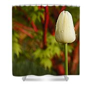 Tulip And Coral Maple In Spring Shower Curtain by Mick Anderson