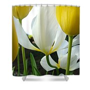 Tulip Flowers Art Prints Yellow White Tulips Floral Shower Curtain by Baslee Troutman