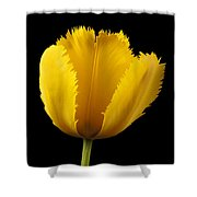 Tulipa Jaune Shower Curtain by Martin Williams