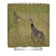 Turkeys Shower Curtain by Michael Peychich