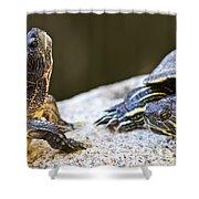 Turtle conversation Shower Curtain by Elena Elisseeva