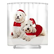 Two Cute Dogs In Santa Outfits Shower Curtain by Elena Elisseeva