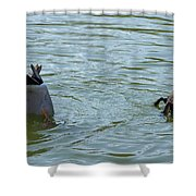 Two Ducks Diving Shower Curtain by Matthias Hauser