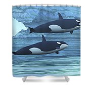 Two Killer Whales Swim Around Submerged Shower Curtain by Corey Ford
