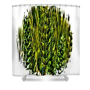 Unripened Wheat II Shower Curtain by David Patterson