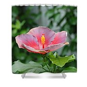 Unusual Flower Shower Curtain by Jennifer Ancker