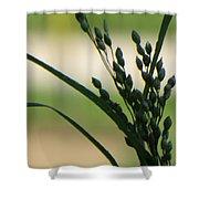 Verdant Grain Shower Curtain by Sonali Gangane
