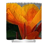 Vibrant Canna Shower Curtain by Susan Herber