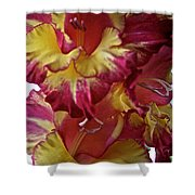 Vibrant Gladiolus Shower Curtain by Susan Herber