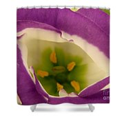 Vibrant Shower Curtain by Lainie Wrightson