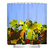 Vineyard Leaves Shower Curtain by Carlos Caetano