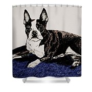 Wake Up Shower Curtain by Susan Herber
