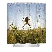 Wasp Spider Argiope Bruennichi In Web Shower Curtain by Konrad Wothe