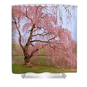 Weeping Spring- Holmdel Park Shower Curtain by Angie Tirado