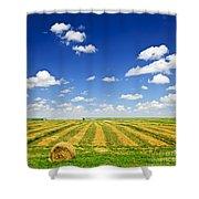 Wheat farm field at harvest Shower Curtain by Elena Elisseeva