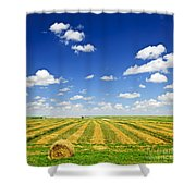 Wheat Farm Field At Harvest Shower Curtain by Elena Elisseeva
