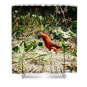 Where Did I Leave My Keys?? Shower Curtain by Alys Caviness-Gober