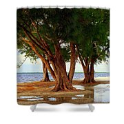 Whispering Trees Of Sanibel Shower Curtain by Karen Wiles